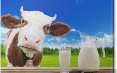W roli głównej mleko.